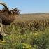 Ziua mondială pentru combaterea deșertificării și a secetei