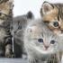 8 august, Ziua Internaţională a Pisicii. Celebrităţi Miau din social-media